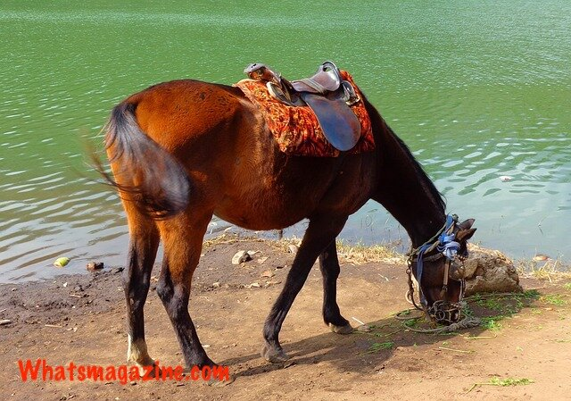 How Far Can a Horse Travel in A Day